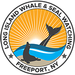 Long Island Whale and Seal Watching